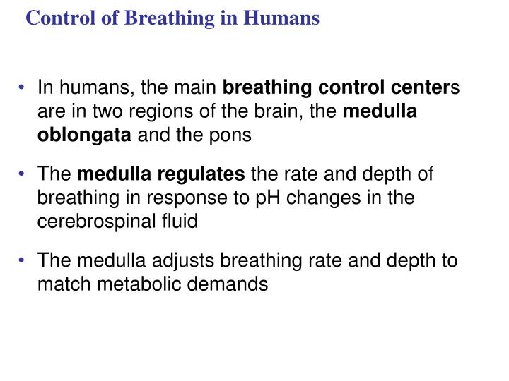 Control of Breathing in Humans