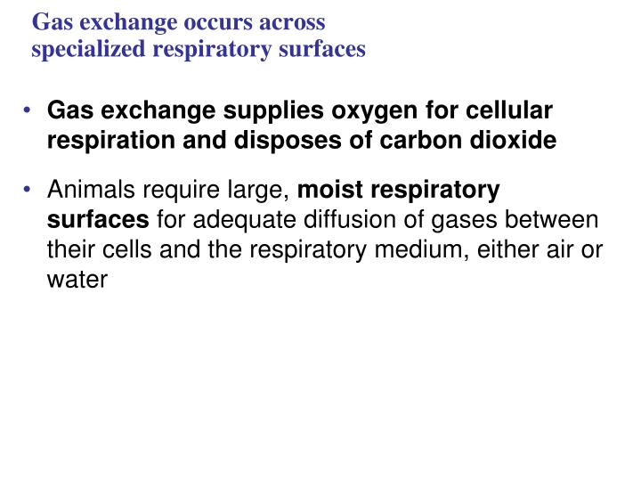 Gas exchange occurs across