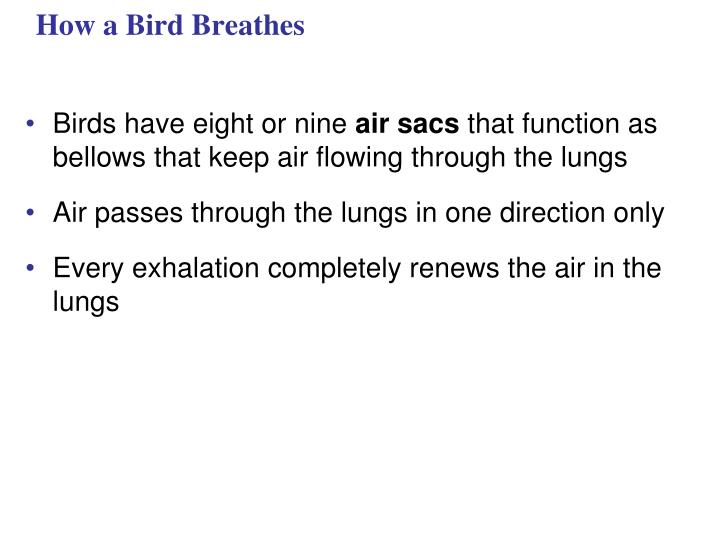 How a Bird Breathes