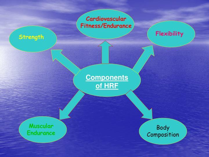 Cardiovascular Fitness/Endurance