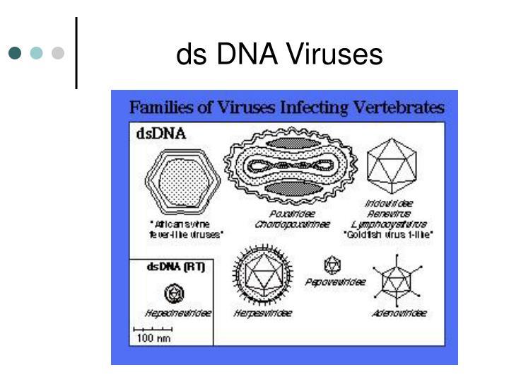 ds DNA Viruses