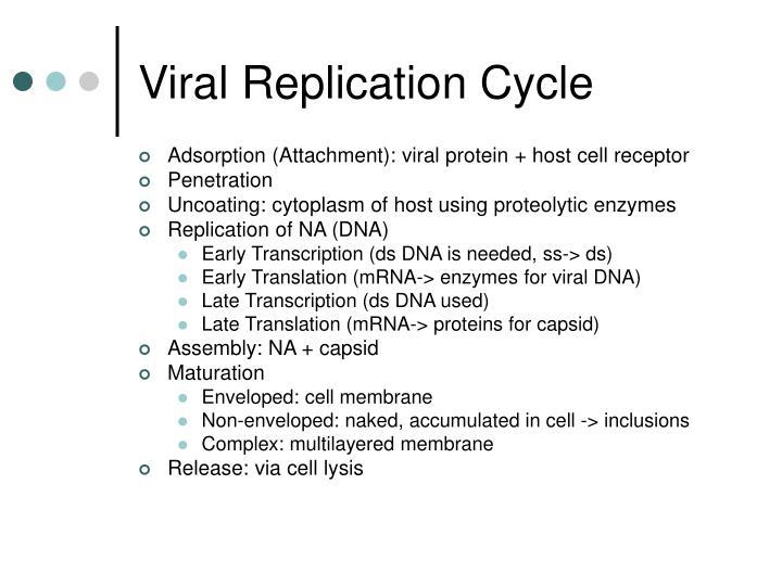 Viral Replication Cycle