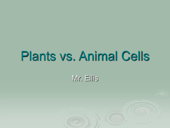 plants vs animal cells n.