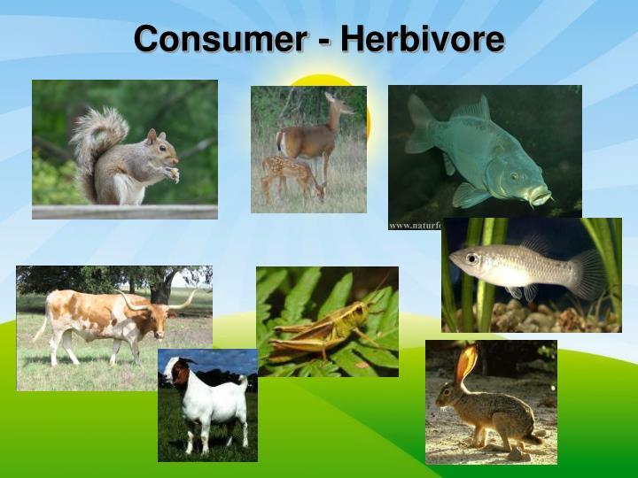 Consumer - Herbivore