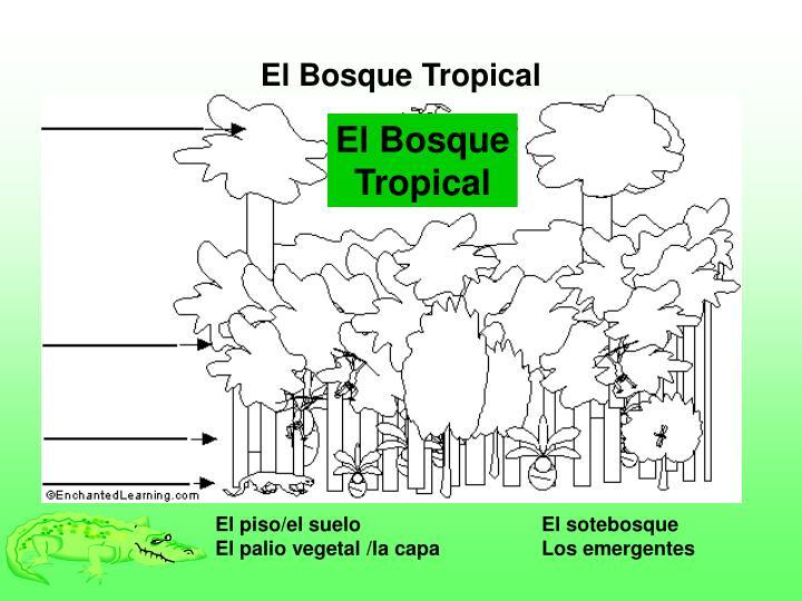 El Bosque Tropical