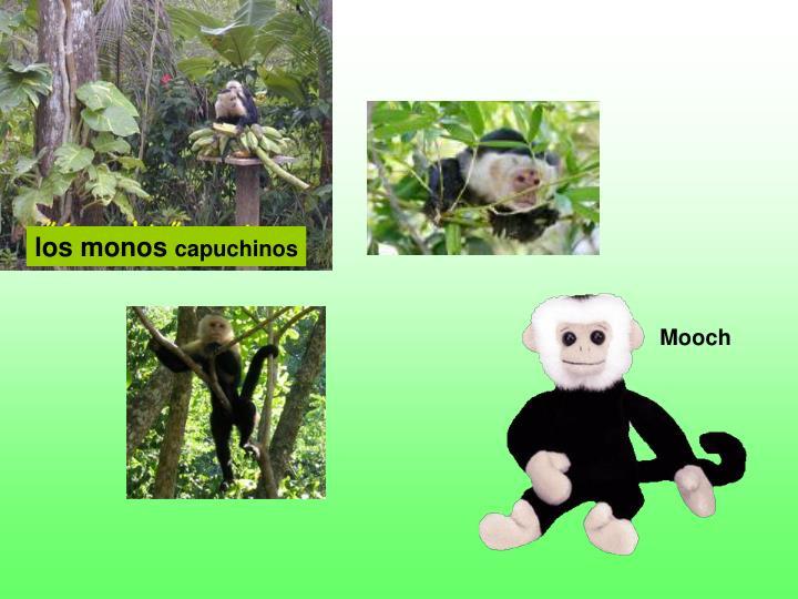 los monos