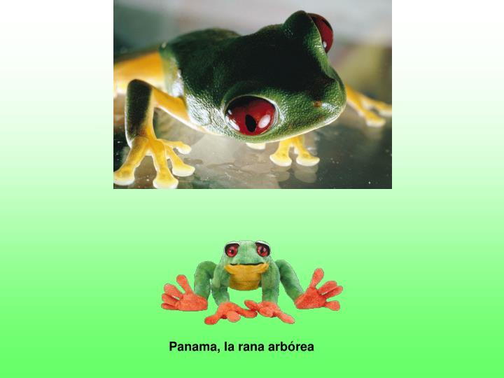 Panama, la rana arb