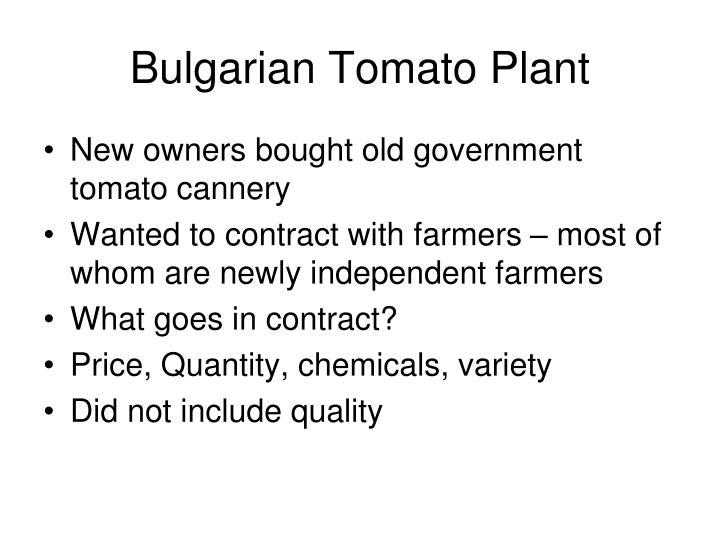 Bulgarian Tomato Plant