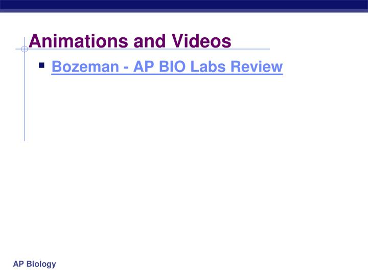 animations and videos n.