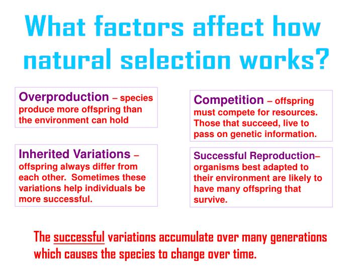 What factors affect how