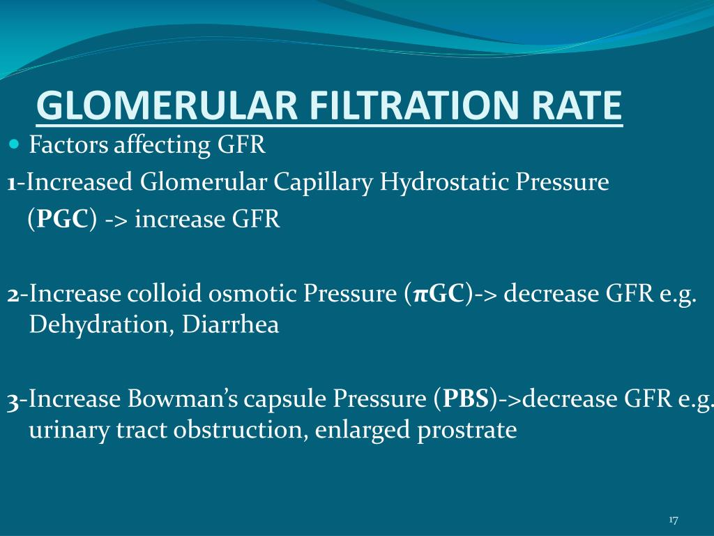 PPT - GLOMERULAR FILTRATION PowerPoint Presentation - ID:6599015