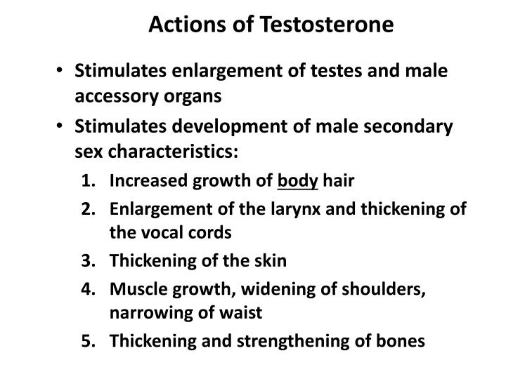 Actions of Testosterone
