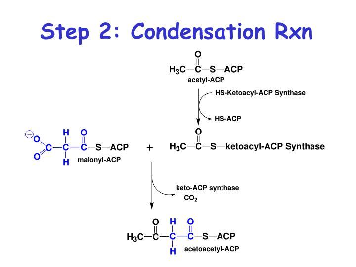 Step 2: Condensation Rxn