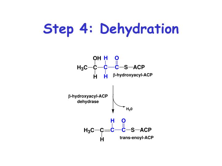 Step 4: Dehydration