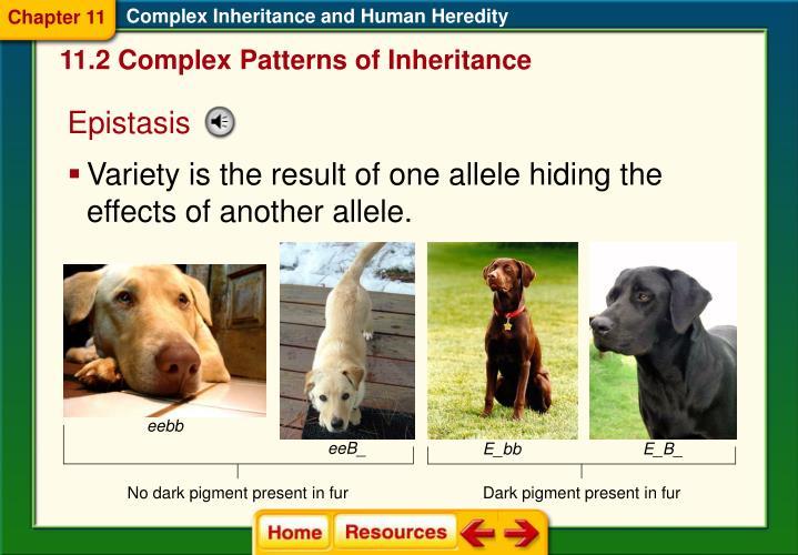 Complex Inheritance and Human Heredity