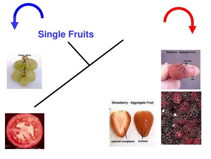 Single Fruits