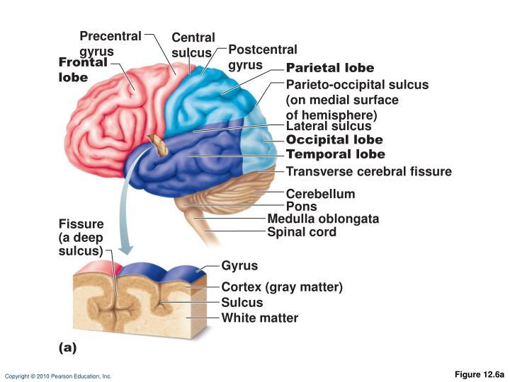 Precentral