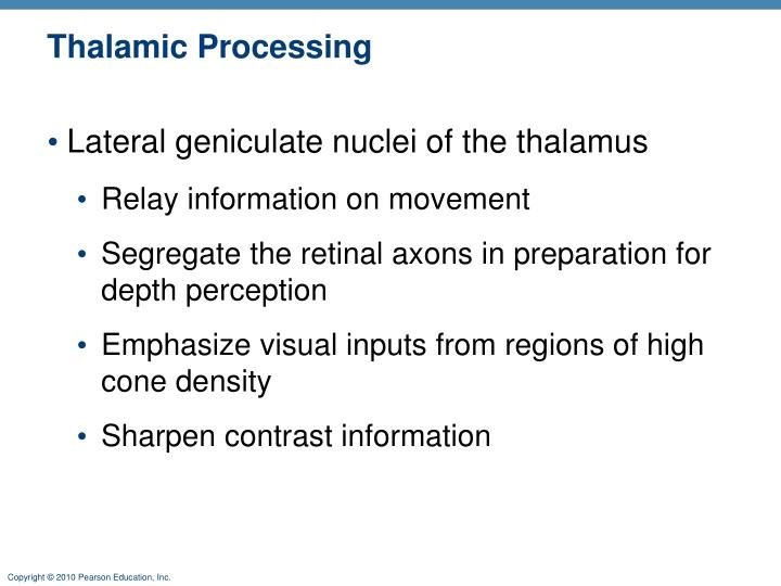 Thalamic Processing