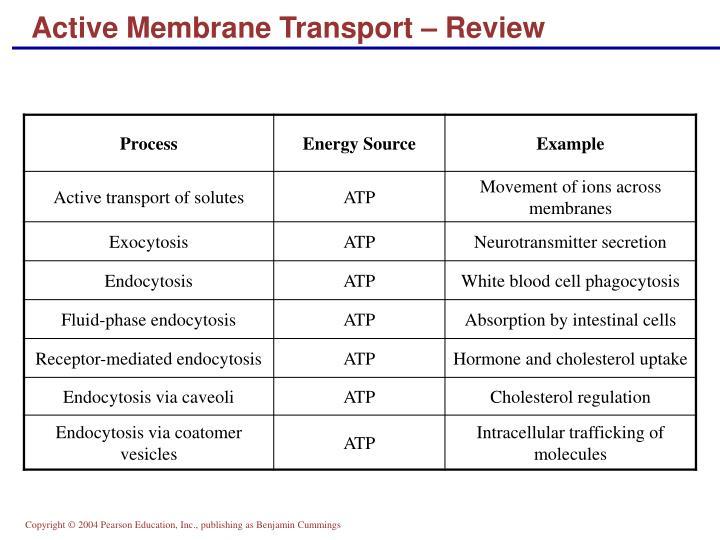 Active Membrane Transport – Review