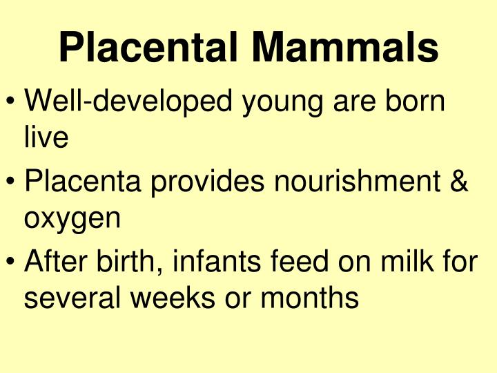 Placental Mammals