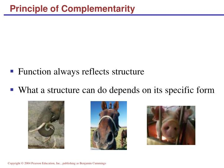 Principle of Complementarity