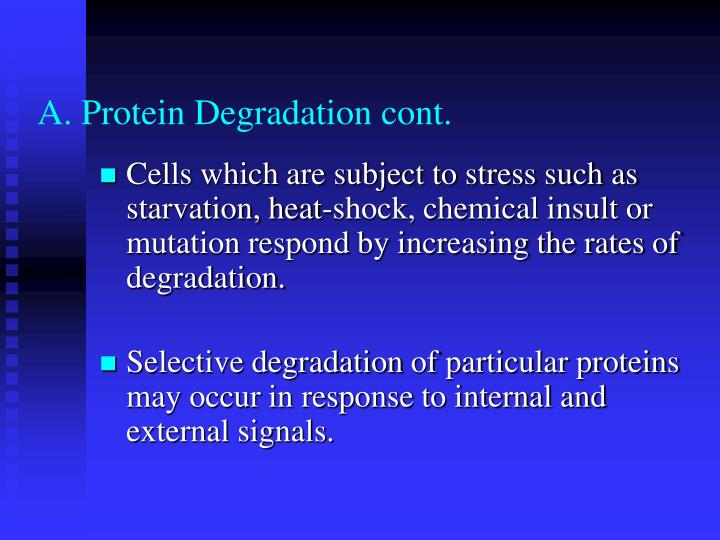 A. Protein Degradation cont.