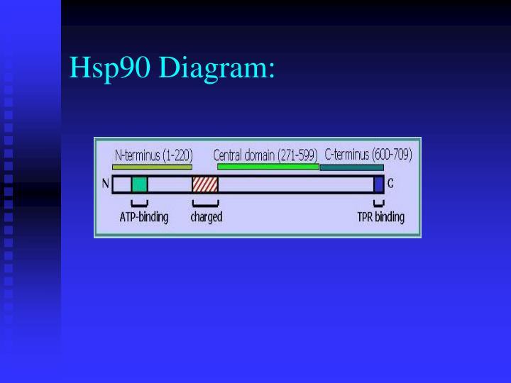 Hsp90 Diagram:
