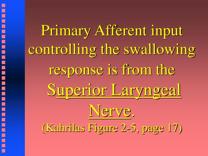 Primary Afferent input controlling the swallowing response is from the