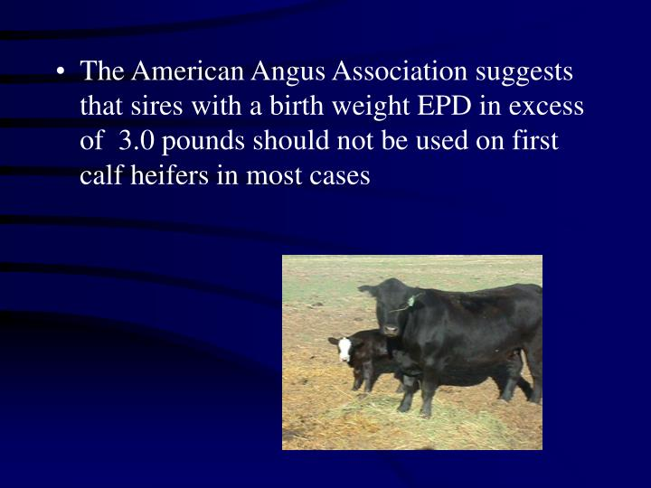 The American Angus Association suggests that sires with a birth weight EPD in excess of  3.0 pounds should not be used on first calf heifers in most cases