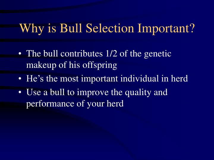 Why is bull selection important