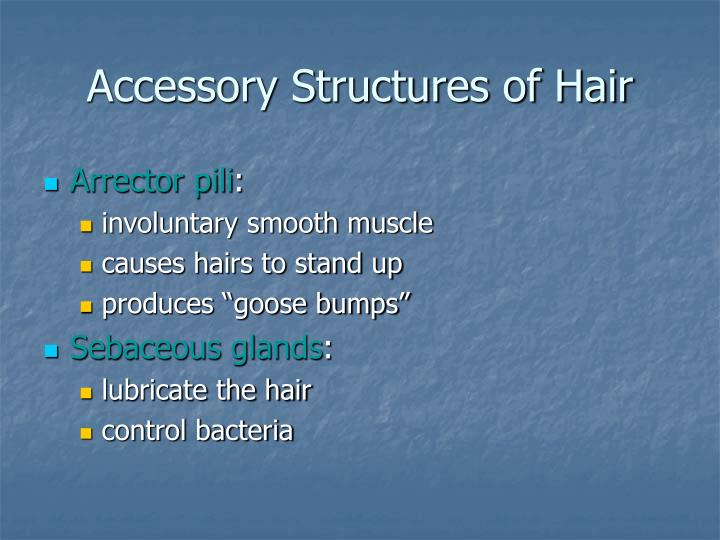 Accessory Structures of Hair