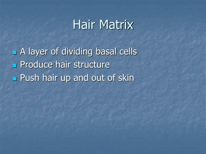 Hair Matrix