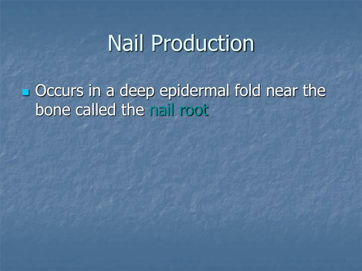 Nail Production