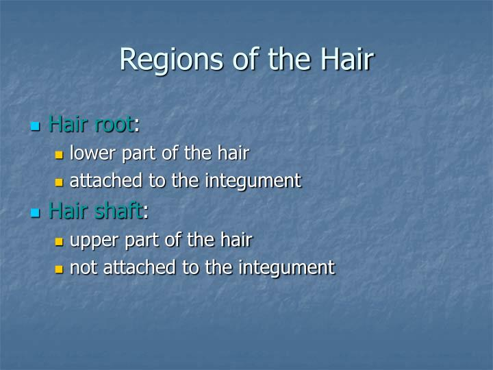 Regions of the Hair