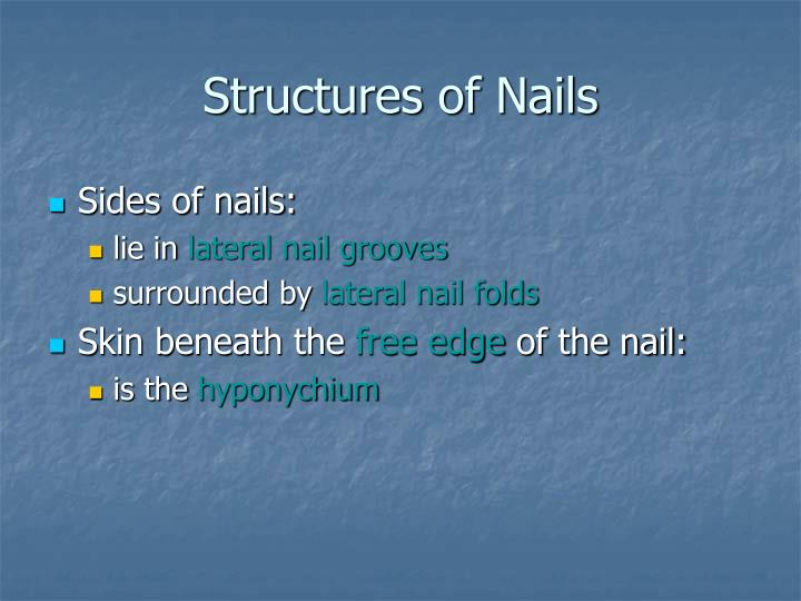 Structures of Nails