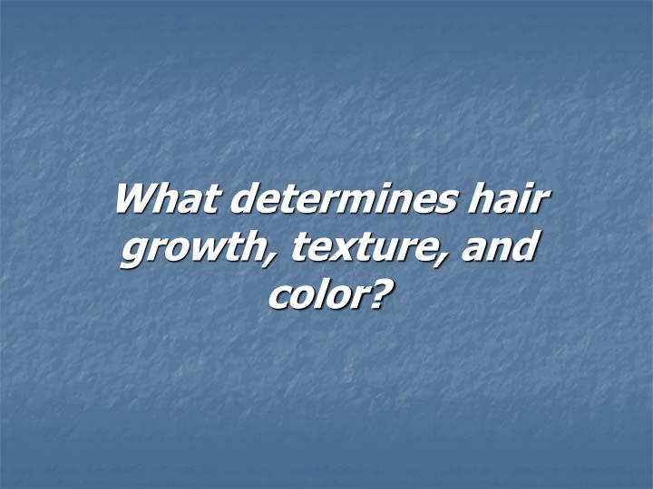What determines hair growth, texture, and color?