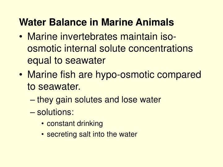 Water Balance in Marine Animals