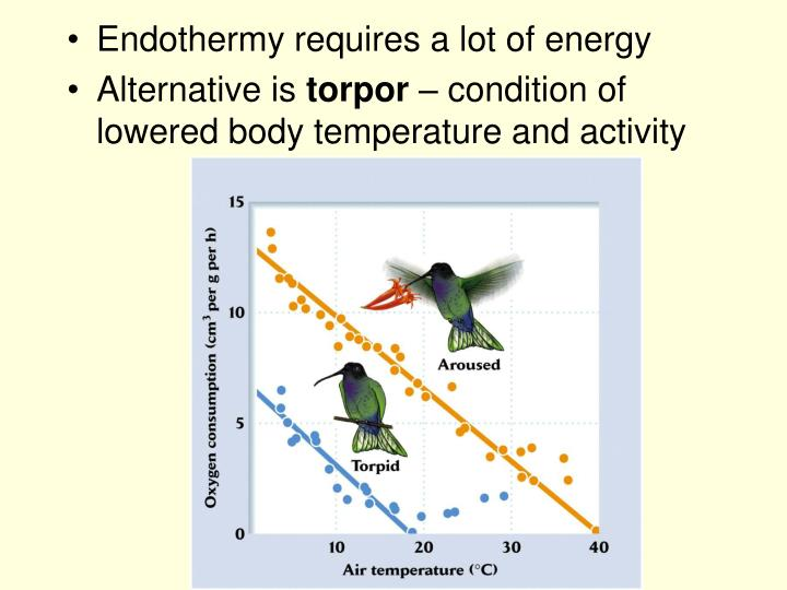 Endothermy requires a lot of energy
