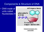 components structure of dna