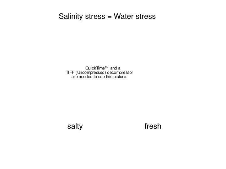 Salinity stress = Water stress
