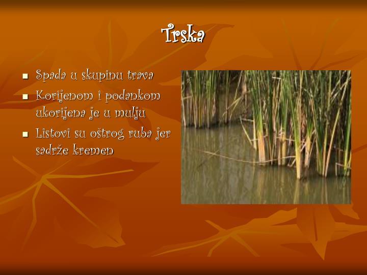 Trska