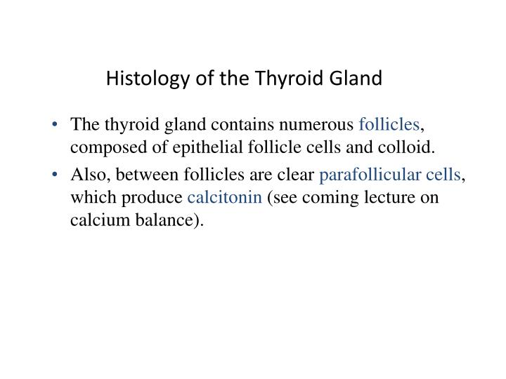 Histology of the thyroid gland