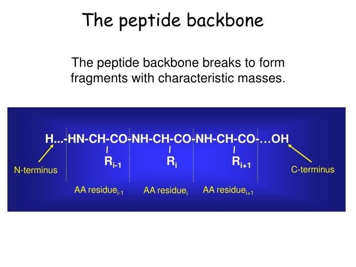 The peptide backbone