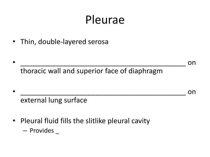 Pleurae