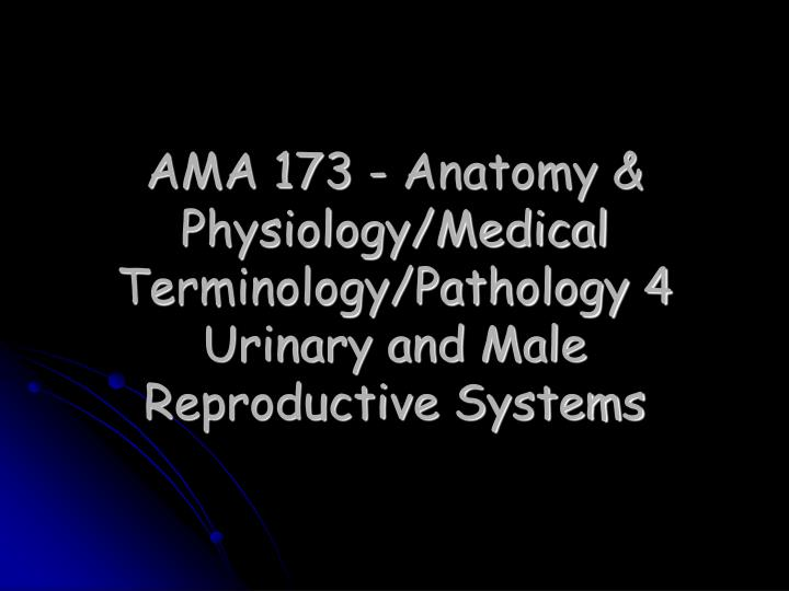 Ama 173 anatomy physiology medical terminology pathology 4 urinary and male reproductive systems