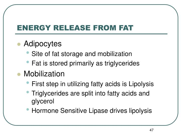 ENERGY RELEASE FROM FAT