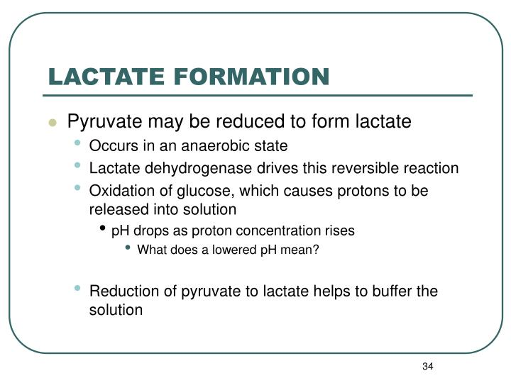 LACTATE FORMATION