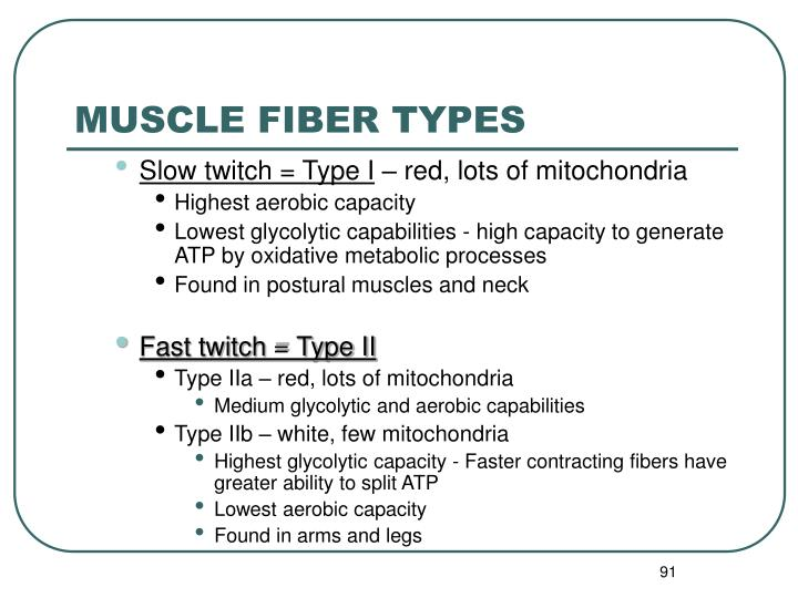 MUSCLE FIBER TYPES
