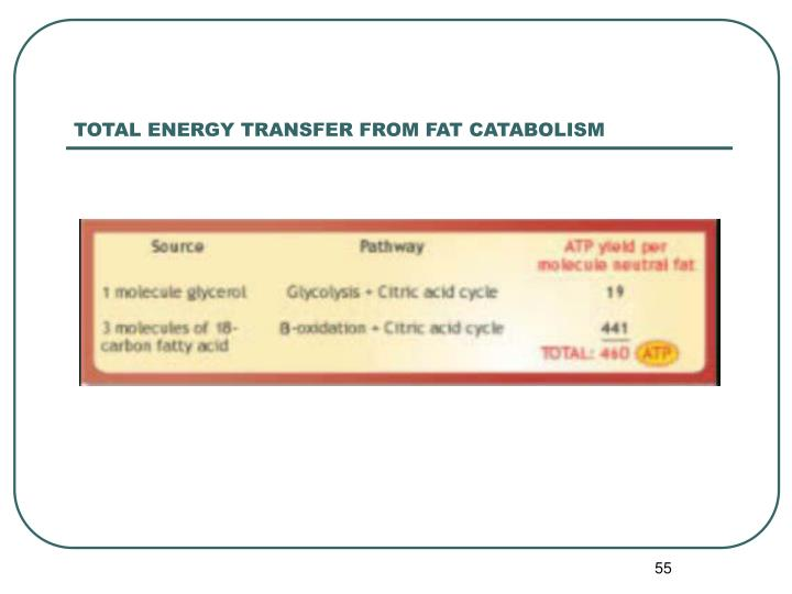 TOTAL ENERGY TRANSFER FROM FAT CATABOLISM