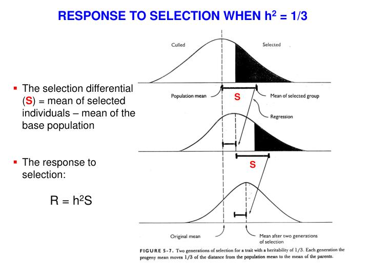RESPONSE TO SELECTION WHEN h